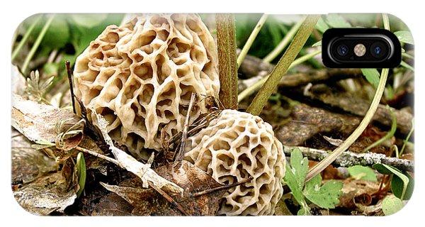 Morel Mushrooms IPhone Case