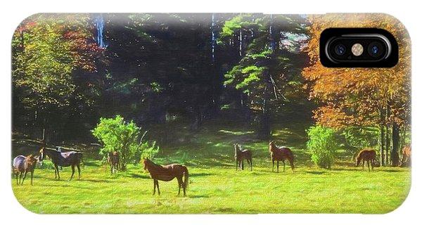 Morgan Horses In Autumn Pasture IPhone Case