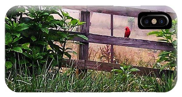 Morning Cardinal IPhone Case