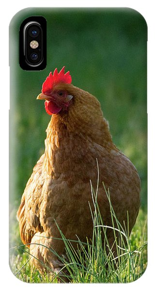 Morning Chicken IPhone Case