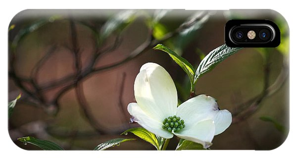 Morning Dogwood At Buffalo River Trail IPhone Case