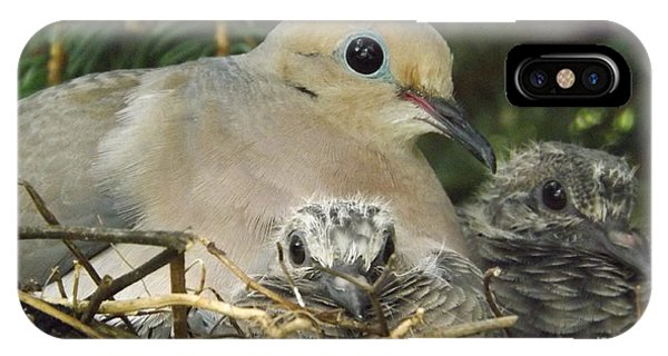 Morning Dove And Two Babys IPhone Case