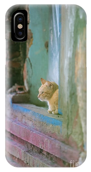 Cambodia iPhone Case - Morning In The Temple A Cats Perspective by Mike Reid