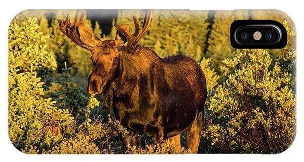 Morning Moose IPhone Case