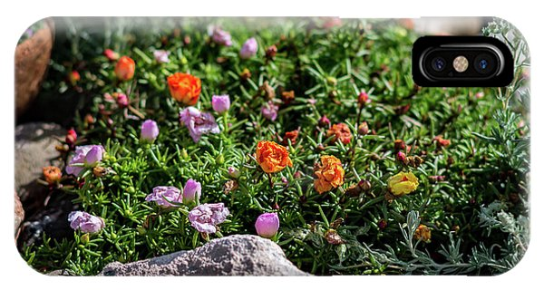 IPhone Case featuring the photograph Moss Rose In The Rocks #1 by John Brink