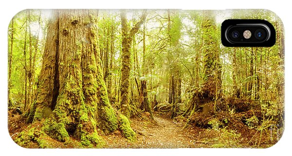 Track iPhone Case - Mossy Forest Trails by Jorgo Photography - Wall Art Gallery