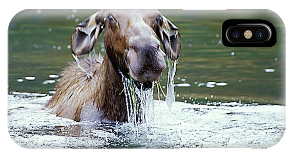 Mossy Moose IPhone Case