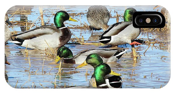 Mostly Mallards IPhone Case