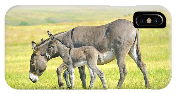 IPhone Case featuring the photograph Mother And Baby Burro by Don and Bonnie Fink