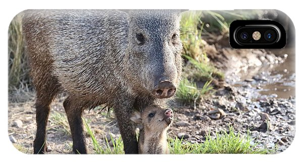 Mother And Baby Javelina IPhone Case