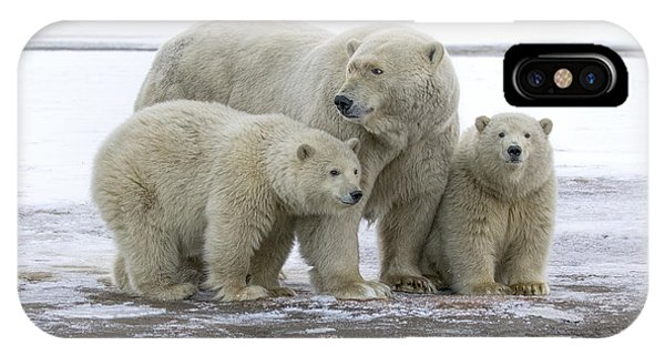 Mother And Cubs In The Arctic IPhone Case
