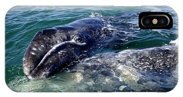 Mother Grey Whale And Baby Calf IPhone Case