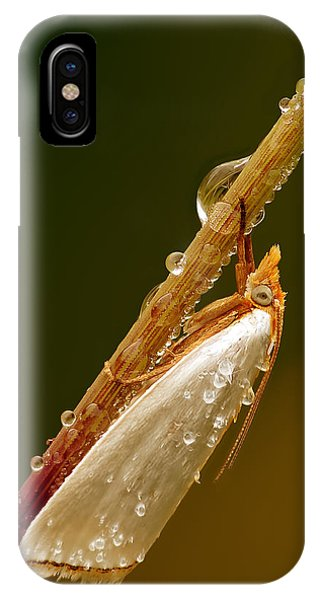 Mother-of-peal Moth IPhone Case