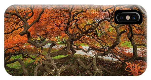 Mount Auburn Cemetery Beautiful Japanese Maple Tree Orange Autumn Colors Branches IPhone Case