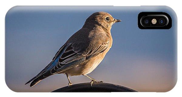 Mountain Bluebird At Sunset IPhone Case