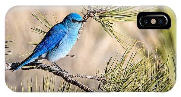 Mountain Bluebird In A Pine IPhone Case