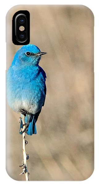 Mountain Bluebird On A Stem. IPhone Case