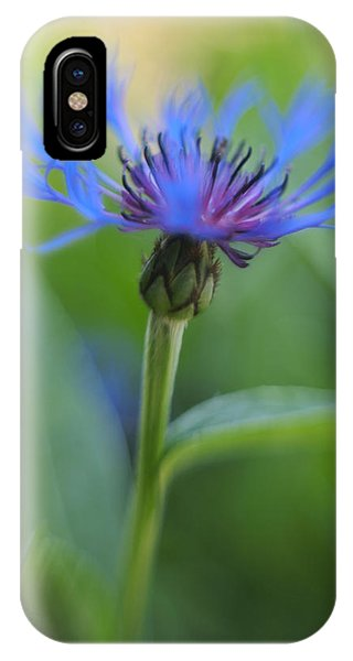 Mountain Bluet Flower IPhone Case