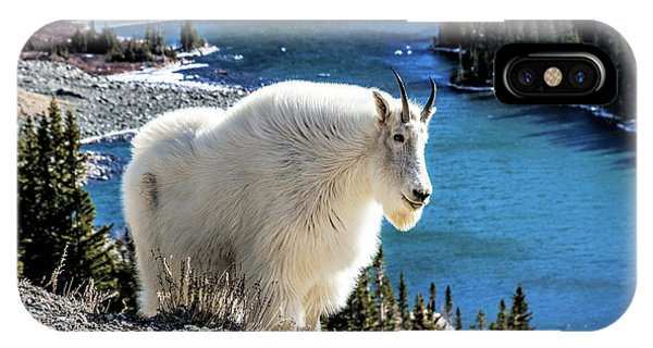 Mountain Goat At Lower Blue Lake IPhone Case