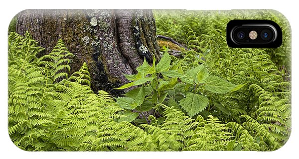 Mountain Green Ferns IPhone Case