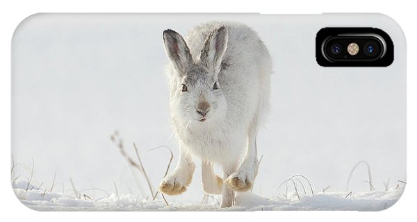 Mountain Hare Approaching IPhone Case