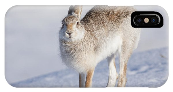 Mountain Hare In The Snow - Lepus Timidus  #2 IPhone Case