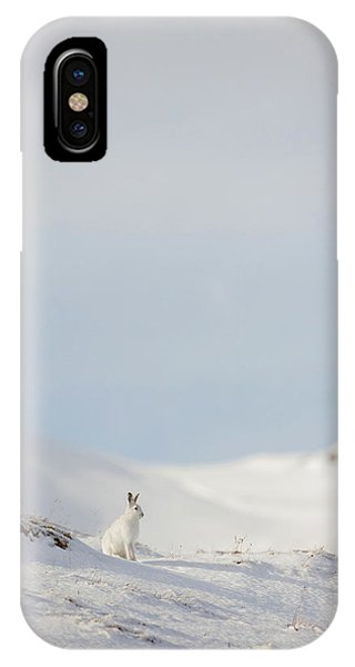 Mountain Hare On Hillside IPhone Case