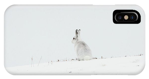 Mountain Hare Sat In Snow IPhone Case