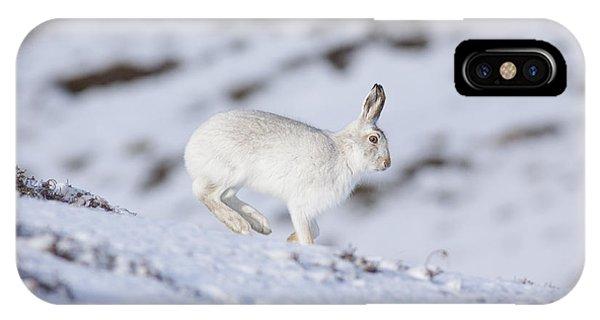 Mountain Hare - Scottish Highlands  #12 IPhone Case