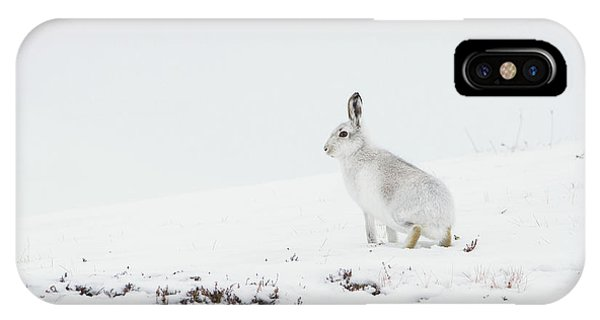 Mountain Hare Side On IPhone Case