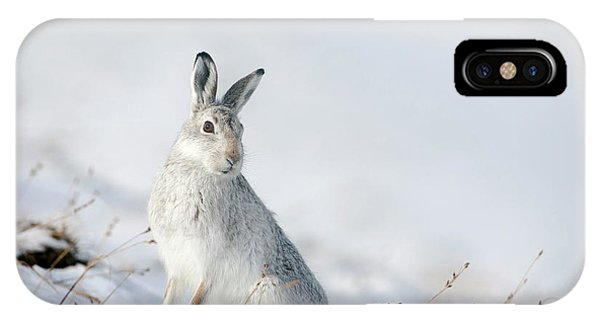 Mountain Hare Sitting In Snow IPhone Case