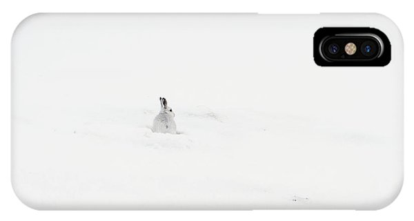 Mountain Hare Small In Frame Left IPhone Case