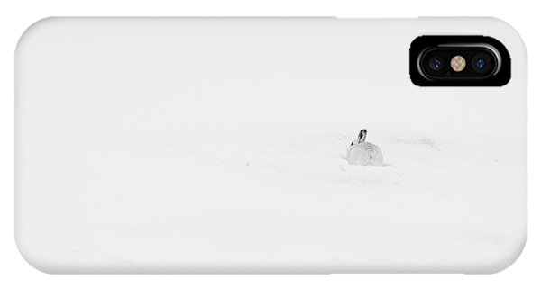 Mountain Hare Small In Frame Right IPhone Case