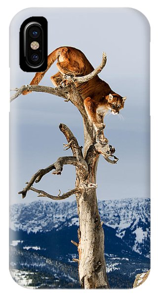 Mountain Lion In Tree IPhone Case