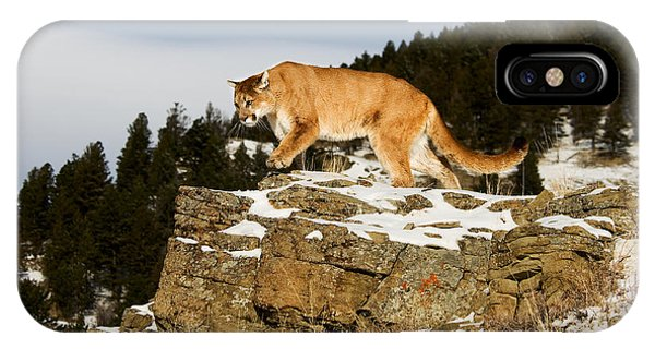 Mountain Lion On Rocks IPhone Case