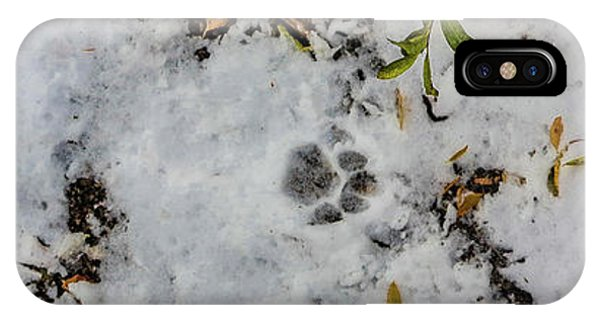 Mountain Lion Tracks In Snow IPhone Case