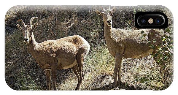 Rocky Mountain Bighorn Sheep iPhone Case - Mountain Sheep by Robert Bales