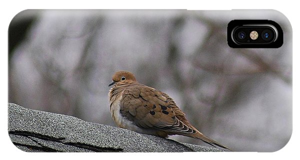 Mourning Dove 20120318_1a IPhone Case