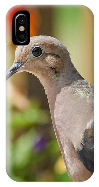 Mourning Dove And Flowers IPhone Case