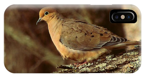 Mourning Dove At Dusk IPhone Case