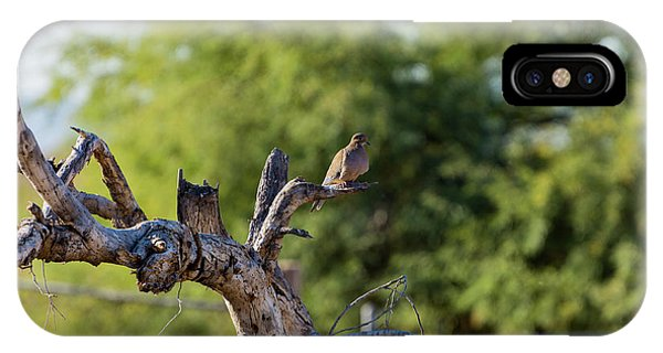 Mourning Dove In Old Tree IPhone Case