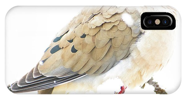 Mourning Dove, Snowy Morning IPhone Case