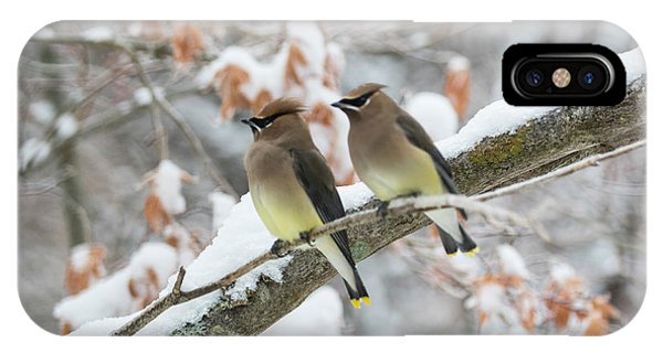 Mr. And Mrs. Cedar Wax Wing IPhone Case