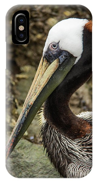 Mr. Cool Wildlife Art By Kaylyn Franks IPhone Case