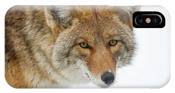 Mr. Coyote IPhone Case