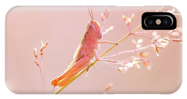 Grasshopper iPhone Case - Mr Pink - Pink Grassshopper by Roeselien Raimond