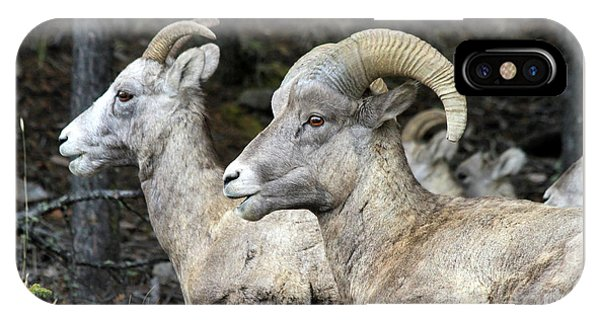Mt Sheep  IPhone Case