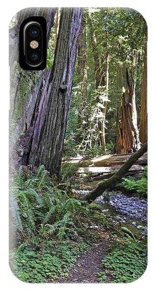 Muir Woods Beauty IPhone Case