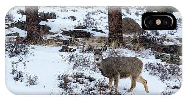 Mule Deer - 8922 IPhone Case