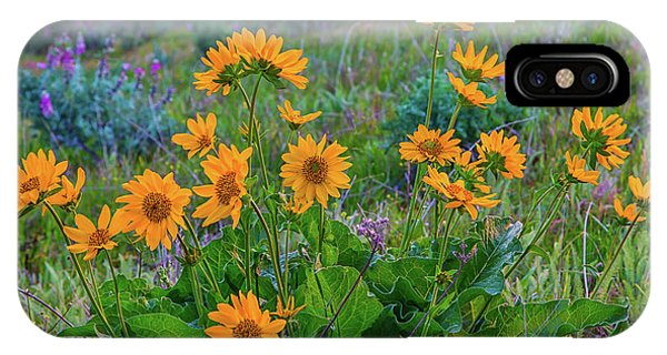 Mule's Ear And Lupine IPhone Case